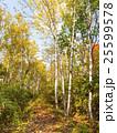 黄葉の森の道 25599578