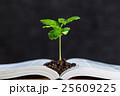 本 植物 新芽の写真 25609225