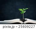 本 植物 新芽の写真 25609227