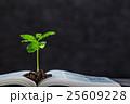 本 植物 新芽の写真 25609228