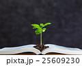 本 植物 新芽の写真 25609230