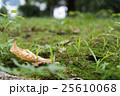 芝の上の落ち葉 25610068