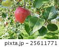 りんご 果実 フルーツの写真 25611771