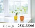 植物 鉢植え 屋内 25613596