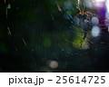ジョロウグモ 木洩れ日 蜘蛛の巣の写真 25614725