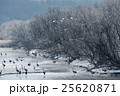 丹頂 冬 飛ぶの写真 25620871