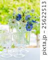 花 ニゲラ ヤグルマギクの写真 25622513