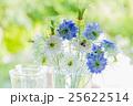 ヤグルマギクとニゲラの花 25622514