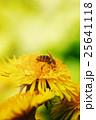 黄色い 黄 黄色の写真 25641118