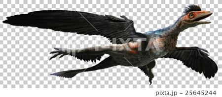 Microraptor 25645244