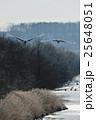 タンチョウ ツル 飛ぶの写真 25648051