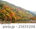 嵐山の紅葉 25655208