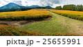 花 生駒高原 キバナコスモスの写真 25655991