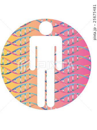 人体シルエットと二重螺旋構造パターン  のイラスト素材 [25675481] - PIXTA