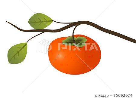 柿の枝のイラストのイラスト素材 25692074 Pixta