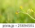 花の上の蠅 25694501