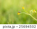 花の上の蠅 25694502