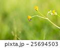 花の上の蠅 25694503