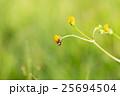 花の上の蠅 25694504
