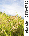 稲作イメージ 25696742