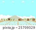 農村 田んぼ 25709329