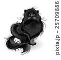 fluffy black cat 25709886