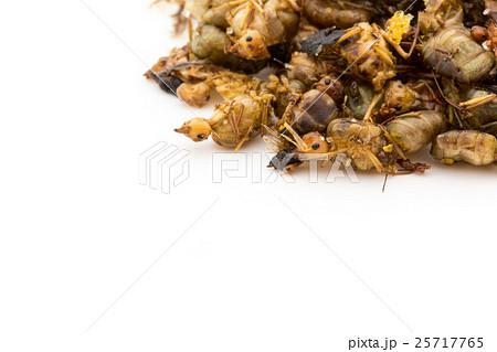 ウィーバーアリ(昆虫食): Queen Weaver Ants 25717765