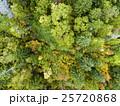 森林の空撮(真俯瞰) 25720868