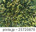 森林の空撮(真俯瞰) 25720870