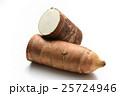 タケノコイモ(京芋)宮崎県産 25724946