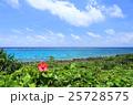 宮古島 海 花の写真 25728575