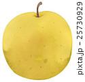 水彩画 挿し絵 果物のイラスト 25730929