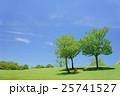 新緑の草原イメージ(奈良公園。飛火野) 25741527