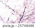 桜の枝 25748486