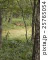 動物 陸上動物 野生動物の写真 25765054