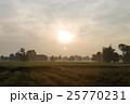 タンボ たんぼ 稲田の写真 25770231