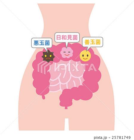 腸内細菌 25781749