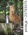 奈良公園 25793070