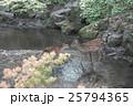 奈良公園 25794365
