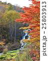 チャツボミゴケ 秋 紅葉の写真 25803913