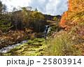 チャツボミゴケ 秋 紅葉の写真 25803914