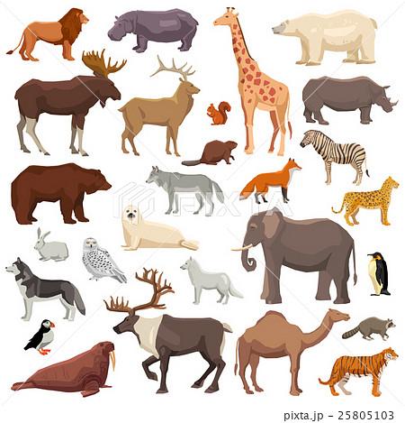 Animals Big Set 25805103