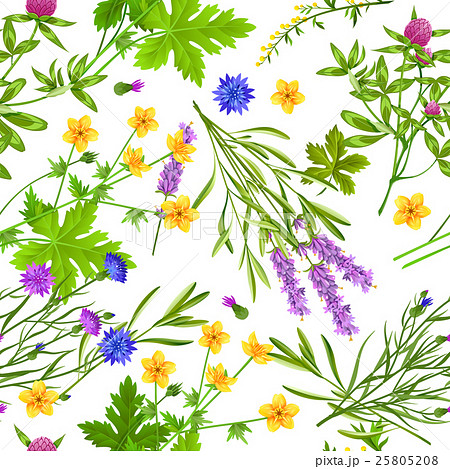 Herbs And Wild Flowers Seamless Pattern 25805208