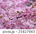 桜 メジロ 野鳥の写真 25827663