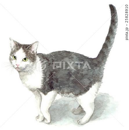 白グレー鉢割れの猫 25828910