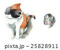 猫 子猫 水彩のイラスト 25828911