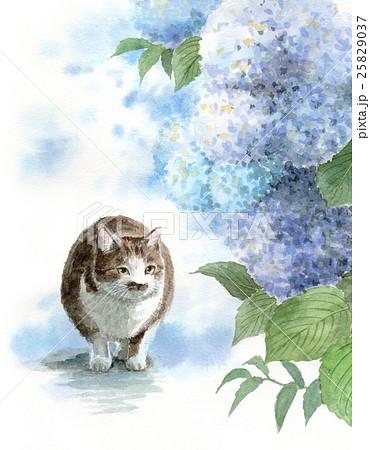 ブルーの紫陽花と猫 25829037