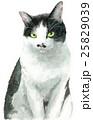 猫 白黒 はち割れのイラスト 25829039