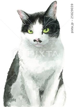 白黒はち割れ猫 25829039