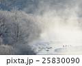 樹氷と霧に包まれたタンチョウのねぐら 25830090